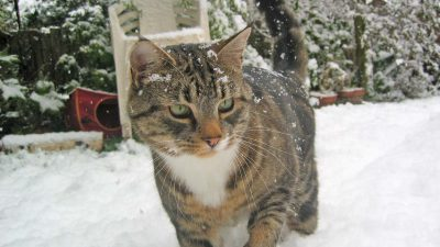 sitting kitty cat playing in the snow